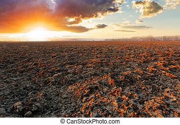 campo, pôr do sol, arado