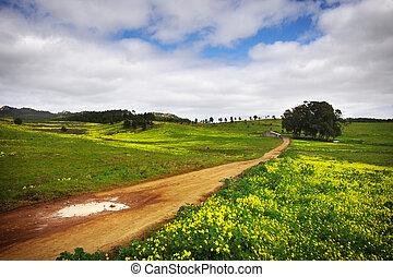 campo, paisaje
