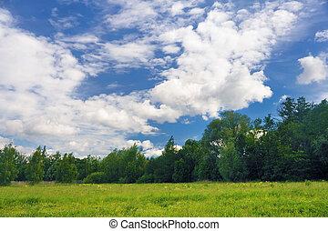 campo, paisaje verde, árboles