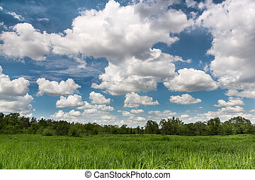 campo, paisaje verde, cloudscape