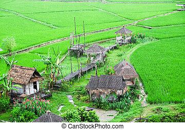 campo, paisaje, vista, arroz verde