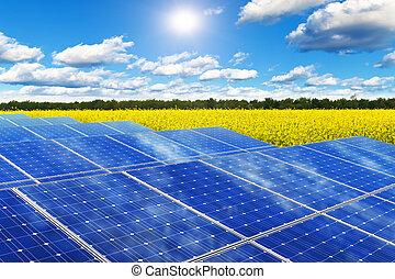 campo, paneles, solar, violación
