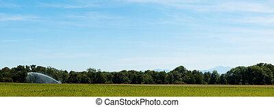 campo, panorámico, paisaje