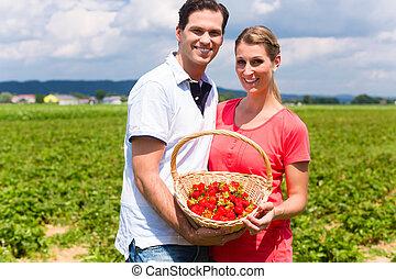 campo, par, morangos, colheita, sees