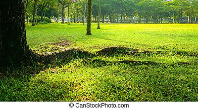 campo, parque, verde, o