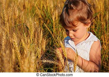 campo, poco, se sienta, trigo, niña