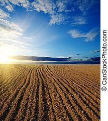 campo, pretas, pôr do sol, ploughed