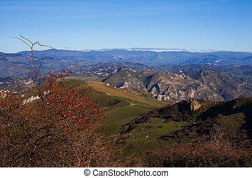 campo, rosehip, siciliano