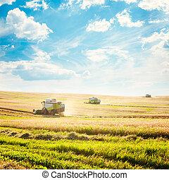 campo, segadores, trigo, combinar