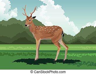 campo, selvatico, cervo