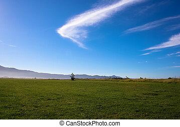 campo, sereno, soleado