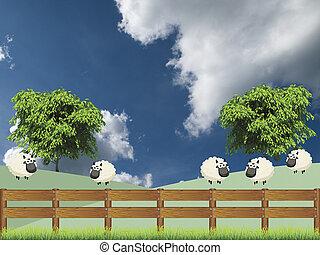 campo, sheep, multitud