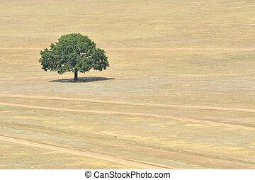 campo, singolo, albero