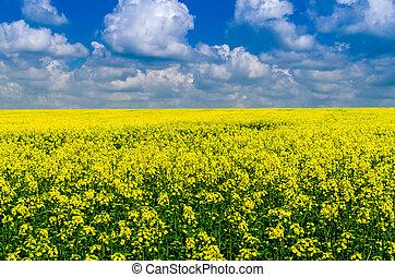 campo, sobre, nuvens, amarela