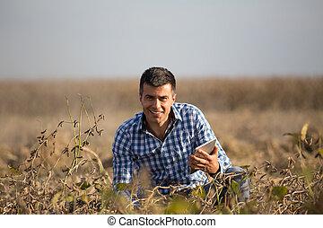 campo, soja, maduro, tabuleta, agricultor