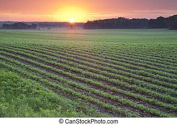 campo, soja, salida del sol