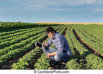 campo, soja, tabuleta, agricultor