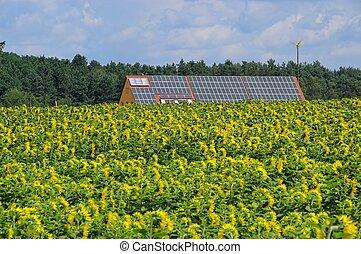 campo, solar, girassol, planta