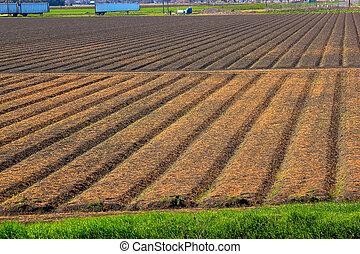 campo, spring., arado
