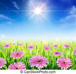 campo, springtime, florescer