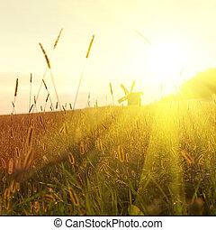 campo, su, tramonto