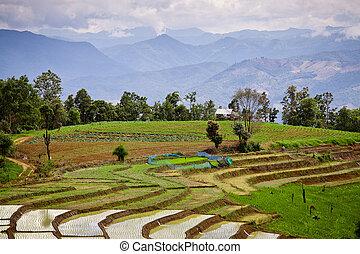 campo, sud-est, riso, terrazzi, asiatico