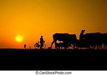 campo, tailandia, vida, maneira
