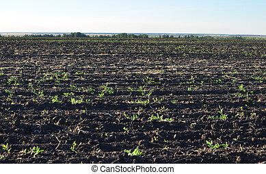 campo, tierra, agrícola, fértil, arado