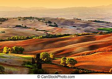campo, Toscana, Italia, paisaje, salida del sol