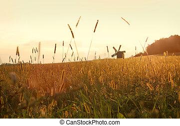 campo, tramonto