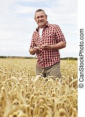 campo, trigo, inspeccionando, colheita, agricultor