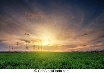 campo, trigo, pôr do sol, paisagem,  rural
