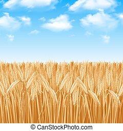 campo, trigo, plano de fondo