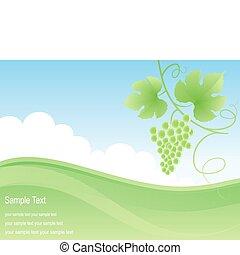 campo, uva verde, fondo.
