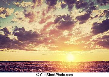 campo, vendimia, tiempo, campo, cosecha, ocaso
