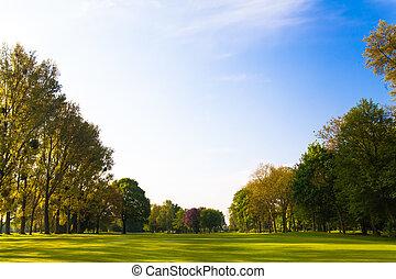 campo, verde, alberi.