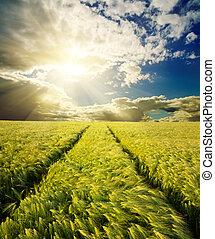 campo verde, com, estrada, sob, pôr do sol