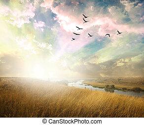 campo verde, com, pássaros