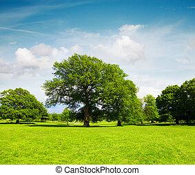 campo verde, e, árvores