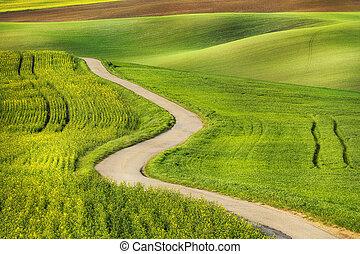 campo, verde, estrada, ondas