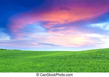 campo verde