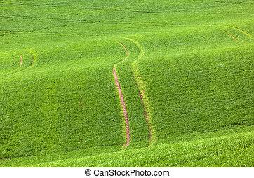 campo, verde, marcas