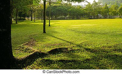 campo verde, o, parque