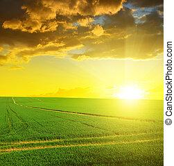 campo, verde, pôr do sol, sky.