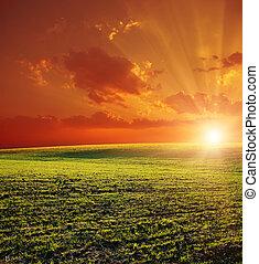 campo, verde, pôr do sol, vermelho, agrícola