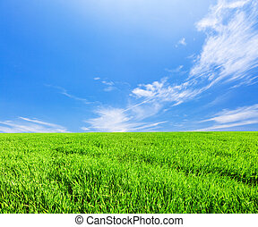 campo verde, sob, azul, céu nublado