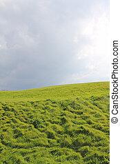 campo verde, sob, céu nublado