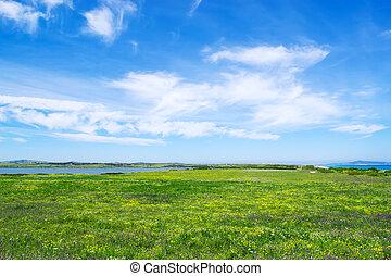 campo verde, sob, um, céu nublado