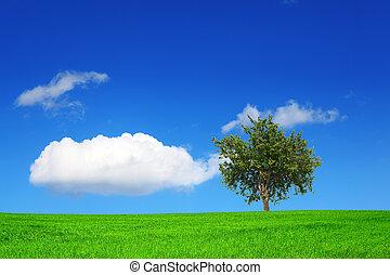 campo verde, y, árbol, en, cielo azul