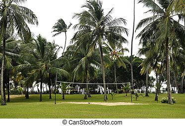 campo, voleibol, costa